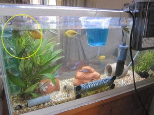 tropicalfish